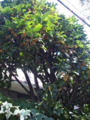 長澤奈央 公式ブログ/秋の香り。 画像1