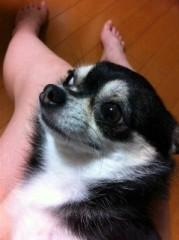 長澤奈央 公式ブログ/久しぶりの愛犬ちゃん。 画像1