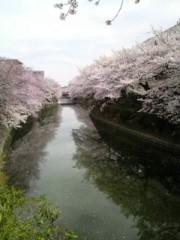 長澤奈央 公式ブログ/桜が与えてくれる物 画像1