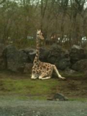 長澤奈央 公式ブログ/首の長い動物。 画像1