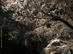 丸山圭子 公式ブログ/六本木HILLS 画像1
