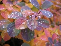 丸山圭子 公式ブログ/雨の写真集 画像3