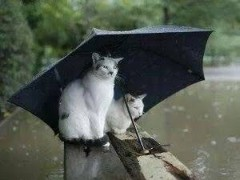 丸山圭子 公式ブログ/雨の写真集 画像2