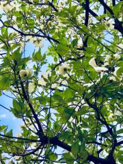 丸山圭子 公式ブログ/よく晴れた日曜日… 画像1