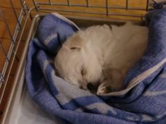 南部直登 公式ブログ/子犬のピース 画像1