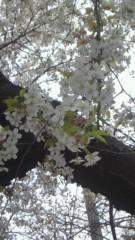 中野裕斗 公式ブログ/4月 画像1