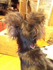 永井恵 公式ブログ/指に犬に猫 画像2