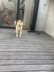 佐橋大輔(ガンリキ) 公式ブログ/暑い 画像1