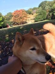 佐橋大輔(ガンリキ) 公式ブログ/ひめの経過 画像1