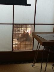 佐橋大輔(ガンリキ) 公式ブログ/食べすぎ 画像1