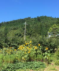 佐橋大輔(ガンリキ) 公式ブログ/こんばんは 画像2