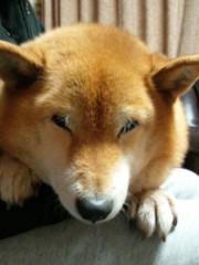 佐橋大輔(ガンリキ) 公式ブログ/ヒメ 画像2