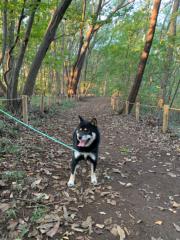 佐橋大輔(ガンリキ) 公式ブログ/朝の散歩 画像1