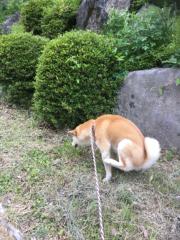 佐橋大輔(ガンリキ) 公式ブログ/ぐっすり 画像1