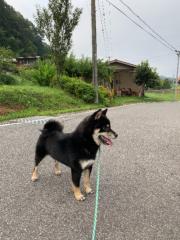 佐橋大輔(ガンリキ) 公式ブログ/お散歩 画像1