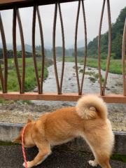 佐橋大輔(ガンリキ) 公式ブログ/よく降ります 画像1