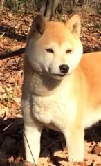 佐橋大輔(ガンリキ) 公式ブログ/犬の気持ち 画像1