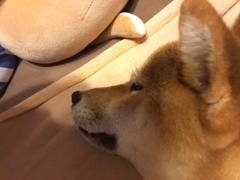 佐橋大輔(ガンリキ) 公式ブログ/犬のうんち 画像1