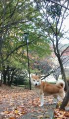佐橋大輔(ガンリキ) 公式ブログ/ご無沙汰です 画像1