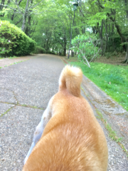 佐橋大輔(ガンリキ) 公式ブログ/いつもの坂 画像1