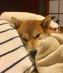 佐橋大輔(ガンリキ) 公式ブログ/びっくり 画像1