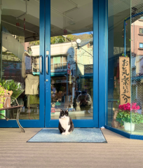 佐橋大輔(ガンリキ) 公式ブログ/猫 画像1