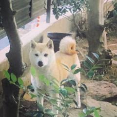 佐橋大輔(ガンリキ) 公式ブログ/朝から 画像1