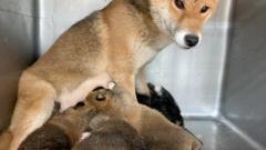 佐橋大輔(ガンリキ) 公式ブログ/仔犬 画像1