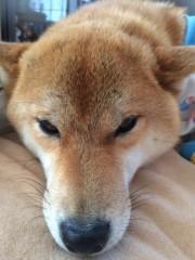 佐橋大輔(ガンリキ) 公式ブログ/すずめ 画像1