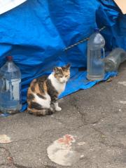 佐橋大輔(ガンリキ) 公式ブログ/猫ちゃん 画像1