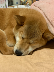 佐橋大輔(ガンリキ) 公式ブログ/花火 画像1