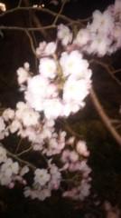 遠野実歌 公式ブログ/夜桜 画像1