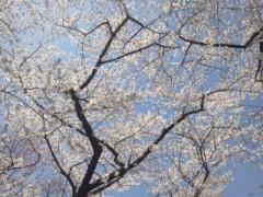 遠野実歌 公式ブログ/さくら 画像1