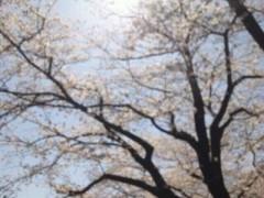 遠野実歌 公式ブログ/さくら 画像3