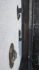 遠野実歌 公式ブログ/石庭です 画像1