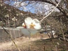 遠野実歌 公式ブログ/梅の花… 画像1