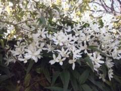 遠野実歌 公式ブログ/白いお花 画像2