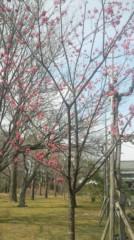 遠野実歌 公式ブログ/カンヒザクラ 画像3