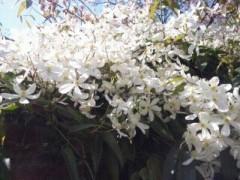 遠野実歌 公式ブログ/白いお花 画像3