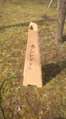 遠野実歌 公式ブログ/カンヒザクラ 画像1