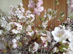 東ちづる 公式ブログ/お花見で小さな東北支援 画像1