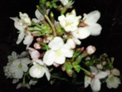 東ちづる 公式ブログ/お花見で小さな東北支援 画像2