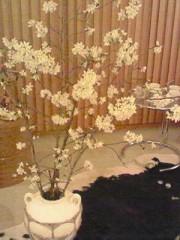 東ちづる 公式ブログ/リビングの桜 画像1