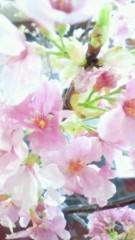 東ちづる 公式ブログ/闘病中でもお花見するのだー 画像1