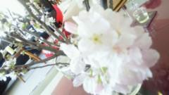 東ちづる 公式ブログ/闘病中でもお花見するのだー 画像3