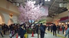 小河慶子 公式ブログ/桜木下大熊猫 画像1