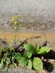 赤城アリア 公式ブログ/なんの花だろ? 画像1