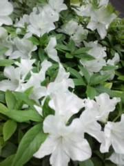 赤城アリア 公式ブログ/今日のお花さん 画像2