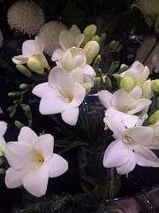 神農幸(じんのさち) 公式ブログ/花屋前で待ち合わせ 画像1