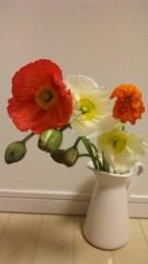 神農幸(じんのさち) 公式ブログ/今日のお花。 画像1
